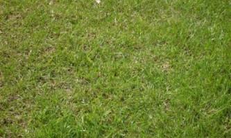 Что делать, если пожелтел газон