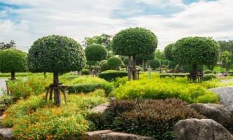 Деревья с шаровидной кроной в ландшафтном дизайне