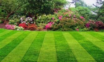 Газон для сада: особенности разных видов