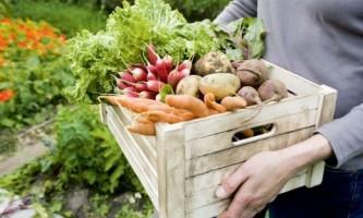 Где и как хранить овощи и фрукты