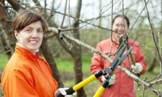 Правила обрезки деревьев и кустарников. Таблица