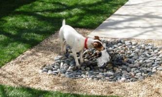 Идеи для заднего двора: сделайте вашу собаку счастливой!