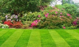 Июнь: что делать в саду?