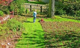 Как подготовить газон к зиме