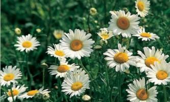 Как подобрать растения для цветника