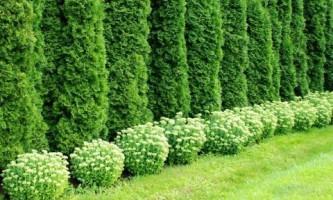 Два проекта садов с живыми изгородями