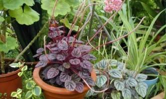 Как удобрять комнатные растения?