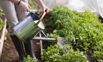 Как улучшить почву с помощью эффективных микроорганизмов?