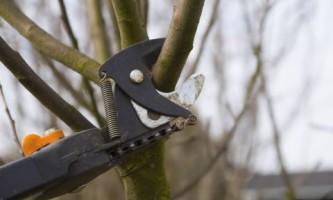Как выбрать сучкорез для обрезки высоких деревьев?