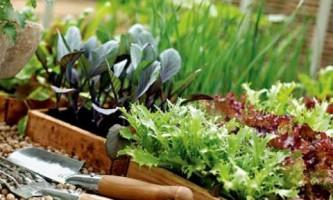 Февраль: что делать в саду