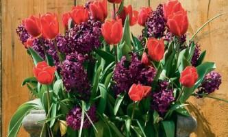 Композиция с тюльпанами и гиацинтами. Сделай сам