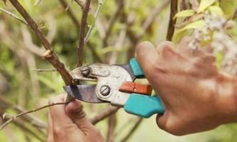 Обрезка деревьев весной: главные правила