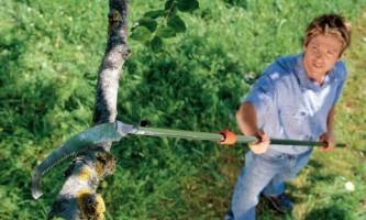 Особенности весенней обрезки разных деревьев