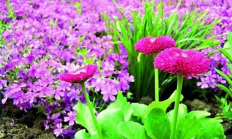 Почвопокровные растения в ландшафтном дизайне