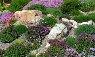 Проект газона из злаков и почвопокровников