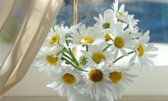 """Ромашка: как заготавливать """"солнечный цветок""""?"""