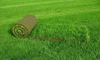 Рулонный газон: особенности укладки