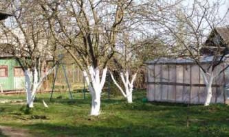 Сад: как правильно поливать деревья?