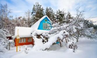 Сад зимой: выбираем деревья и кустарники