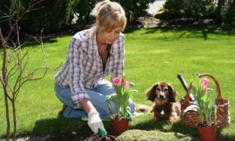 Тюльпаны и крокусы: посадка луковичных