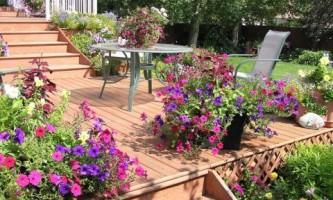 Топ-10 растений для сада в контейнерах