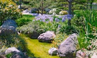Топ-12 растений для каменистого сада
