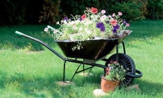 Топ-6 растений для сада в стиле кантри