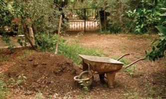 Ухаживаем за садом: подкормка и полив