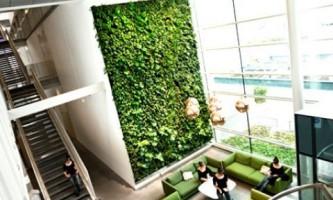 Вертикальное озеленение - модный тренд