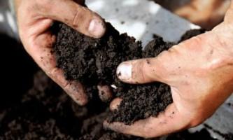 Выбираем чернозем для улучшения почвы