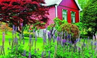 Выбираем растения с пурпурной кроной