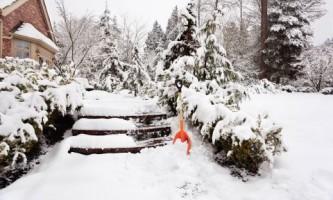 Зима в саду. Какие работы следует выполнять